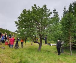 Tré ársins 2020 útnefnt að Skógum í Þorskafirði